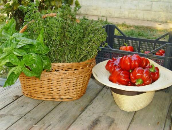legume de la Ferma lu Mos Ghita (1)
