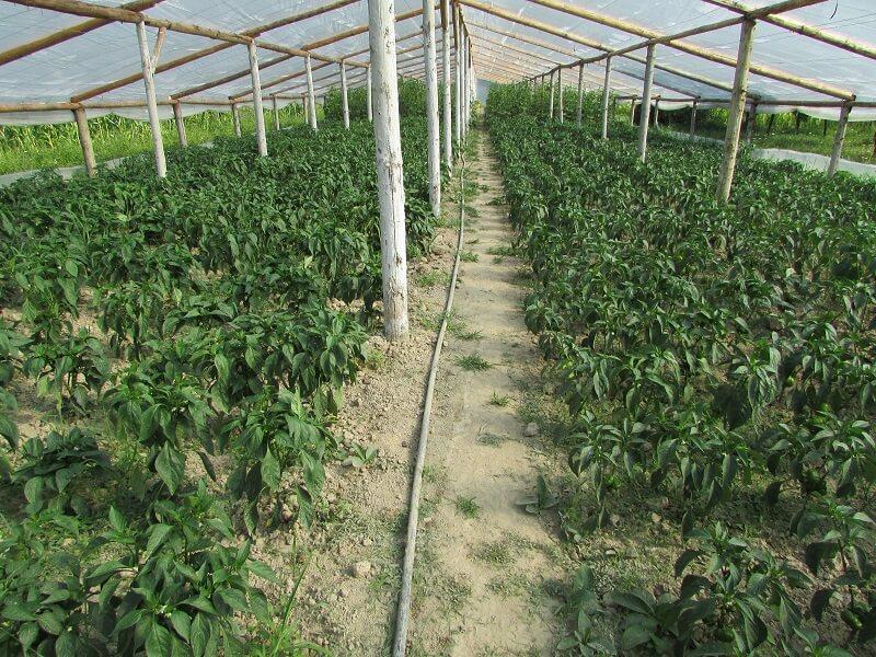 lusca-produse-cu-gust-romanesc-cos-legume-nasaud-livrare-la-domiciliu-6