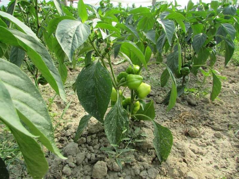 lusca-produse-cu-gust-romanesc-cos-legume-nasaud-livrare-la-domiciliu-8