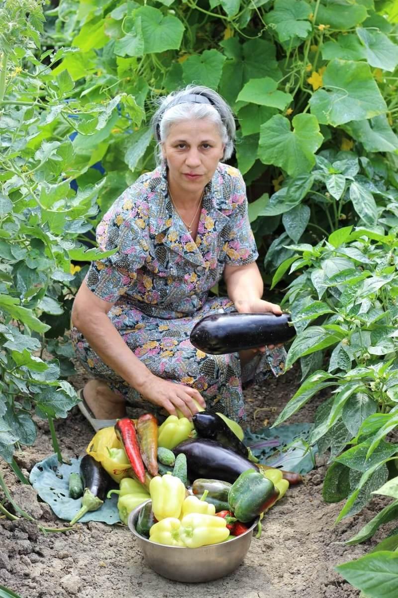 poeferma-ferma-din-localitatea-bucecea-judetul-botosani-29