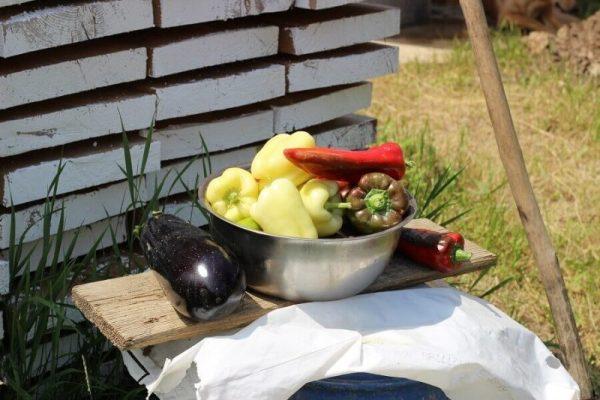poeferma-ferma-din-localitatea-bucecea-judetul-botosani-43