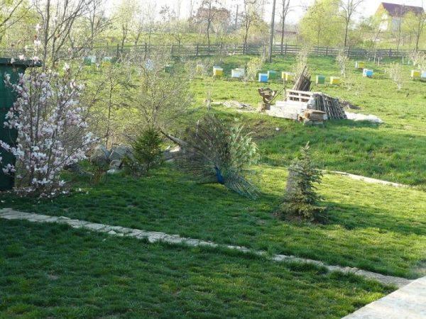 poeferma-ferma-din-localitatea-bucecea-judetul-botosani-61