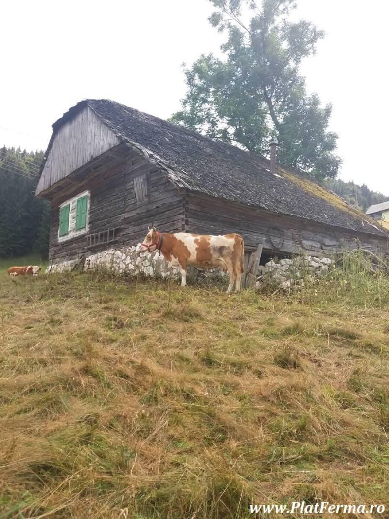 PlatFerma in vizita la Ferma Blajinilor din Fundata, judetul Brasov (16)