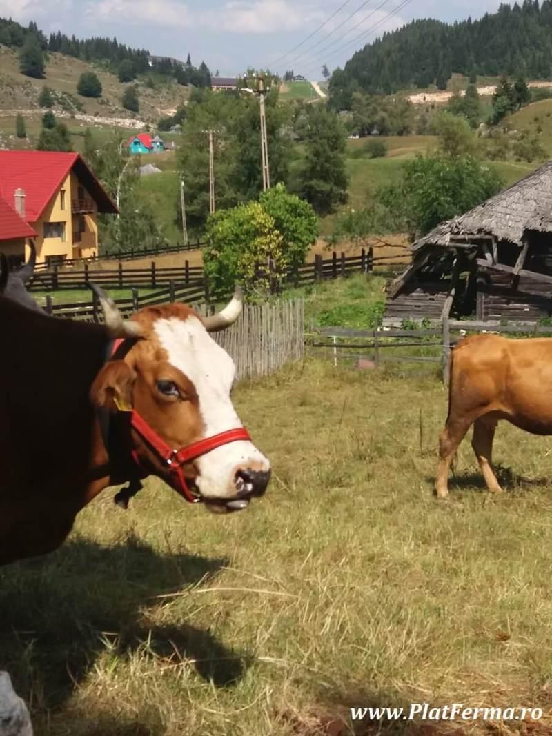 PlatFerma in vizita la Ferma Blajinilor din Fundata, judetul Brasov (18)