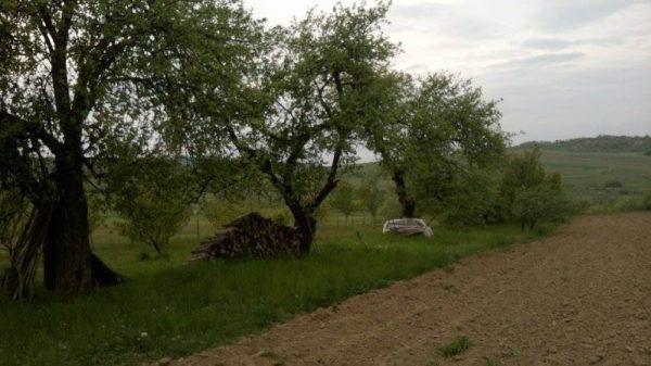Pomăria Bădăcin, Județul Sălaj (39)