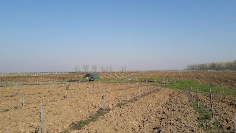 Sana plant extract, plantatie lavanda, mur, soc si aronia, sucuri naturale (2)