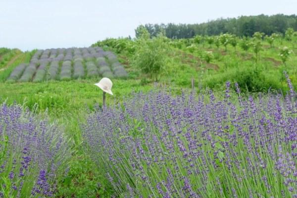 Sana plant extract, plantatie lavanda, mur, soc si aronia, sucuri naturale (24)