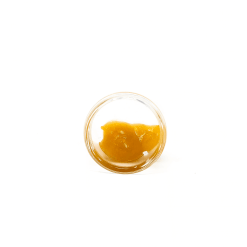 Mimosa-Hybrid