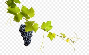 grapes-PLATINUM-Wine-Lounge