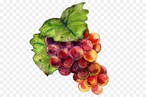 kisspng-wine-grape-drawing-raceme-painting-hand-painted-grapes-5a9ec0d91d79a7.6341229515203534971207