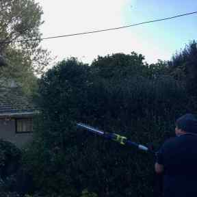 After. Shrub trimmed, safely away from power line and looking tidy.