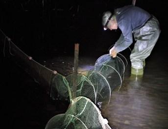 Trap KParr check nets IDDF9250