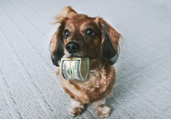 Dog with money in its mouth