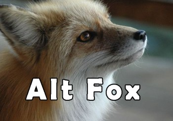 The Alt Fox