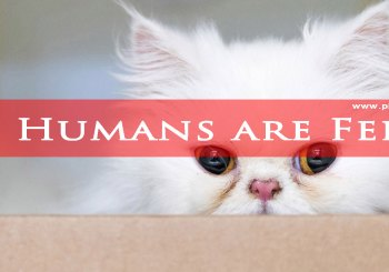 All Humans are Feral