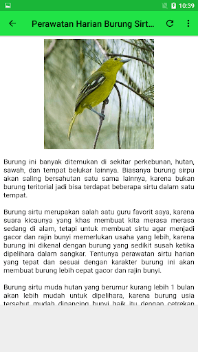 Suara Burung Cipau : suara, burung, cipau, ✓[2021], Suara, Burung, Sirtu, Cipoh, Offline, Android, Download, [Latest]