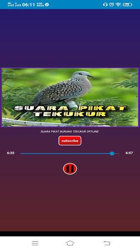 Download Suara Tekukur Betina : download, suara, tekukur, betina, Download, Suara, Pikat, Burung, Tekukur, Android, STEPrimo.com