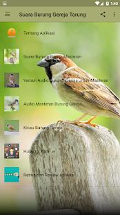 Suara Gereja Kawin : suara, gereja, kawin, Suara, Burung, Gereja, Kicau, መተግባሪያዎች, Google, ላይ