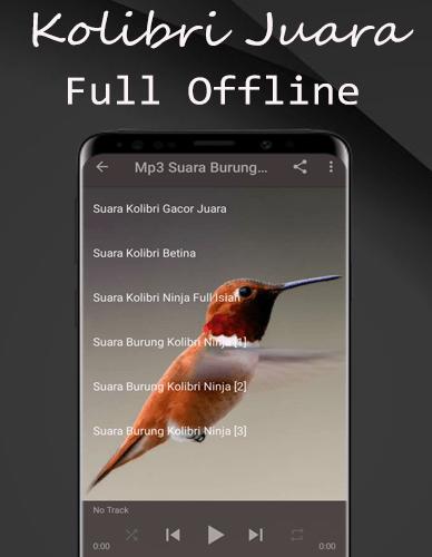 Kolibri Kelapa Mp3 : kolibri, kelapa, Download, Suara, Burung, Kolibri, Pikat, Offline, Android, STEPrimo.com