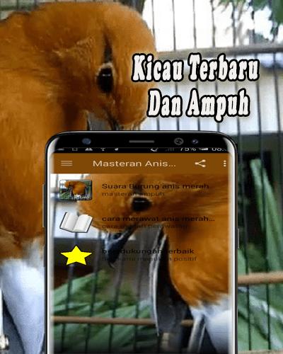 Download Mp3 Kicau Masteran Anis Merah : download, kicau, masteran, merah, Download, Merah, Gacor, Ngeplong, Android, STEPrimo.com