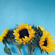Flowers Wallpaper for PC