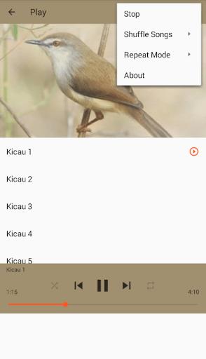 Download Suara Burung Sawah : download, suara, burung, sawah, Download, Kicau, Burung, Ciblek, Sawah, Android, STEPrimo.com