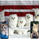 Cat Wallpaper App for PC