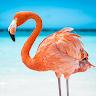 The Flamingo game apk icon