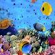 Aquarium Wallpapers for PC