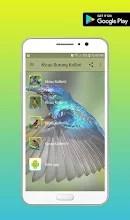 Suara Burung Kolibri Manggar : suara, burung, kolibri, manggar, Master, Kicau, Burung, Kolibri, Izinhlelo, Zokusebenza, Ku-Google
