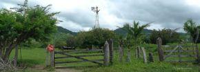 P1220574 GREEN near iguana