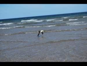 fotos playas doradas 13