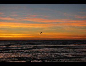 fotos playas doradas 10
