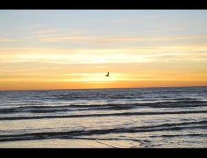 fotos playas doradas 08