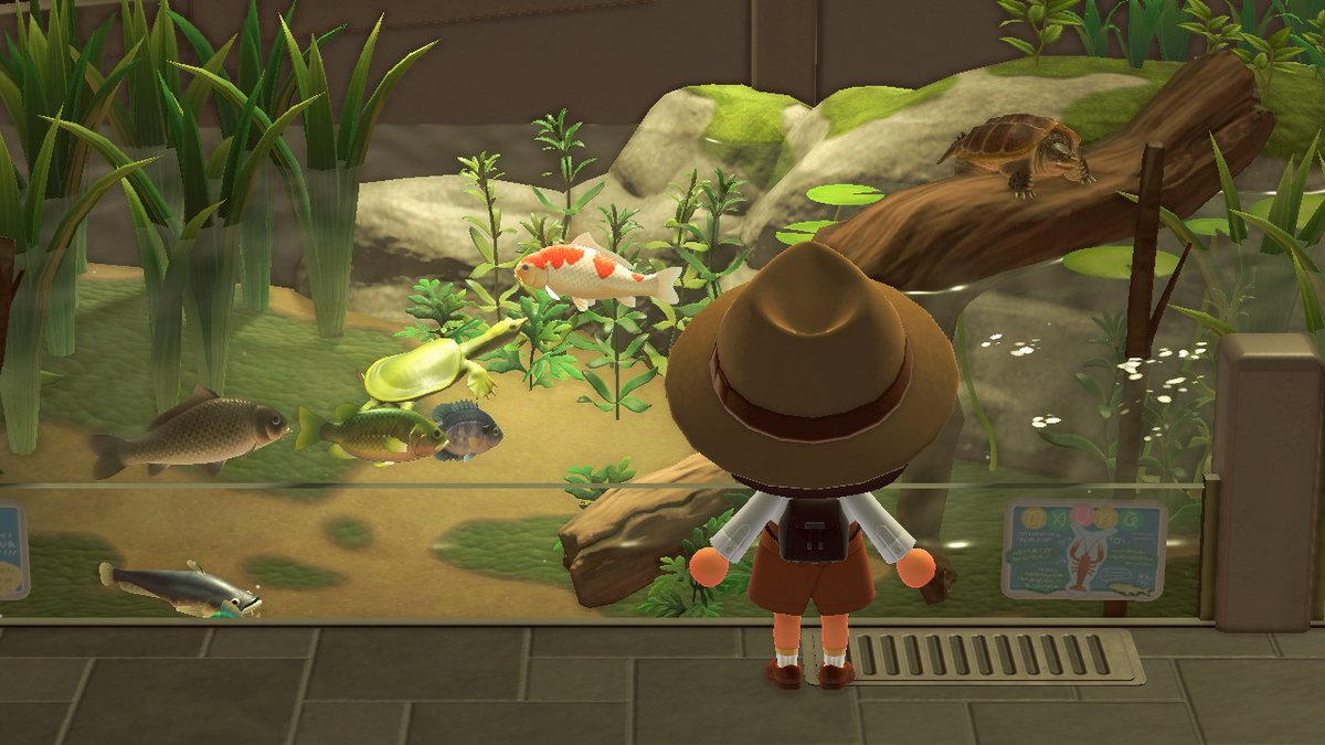 How To Catch A Soft-Shelled Turtle In Animal Crossing: New Horizons