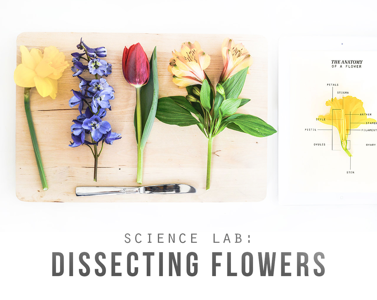 Science Lab Dissecting Flowers