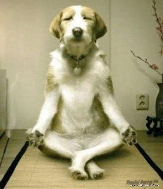 Собака - релаксака!