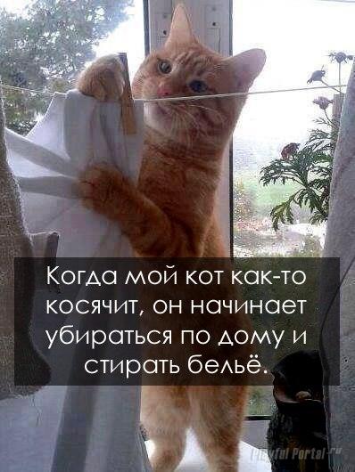 Кот накосячил