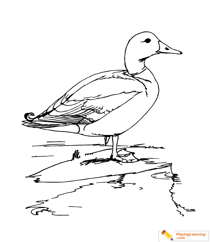 Mallard Train Coloring Pages