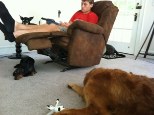 Nick & dogs
