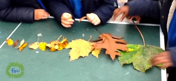 Ordering by length. Shortest to longest. Outdoor longest to shortest activity. Leaf activity for children.