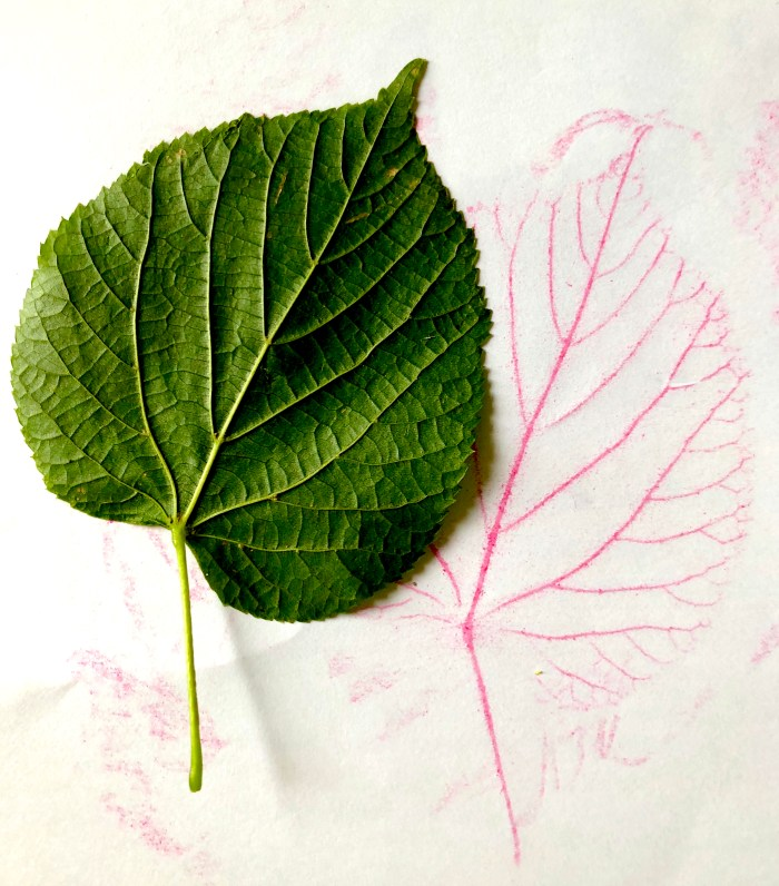 Leaf rubbing with crayons. Autumn leaf activity for children.