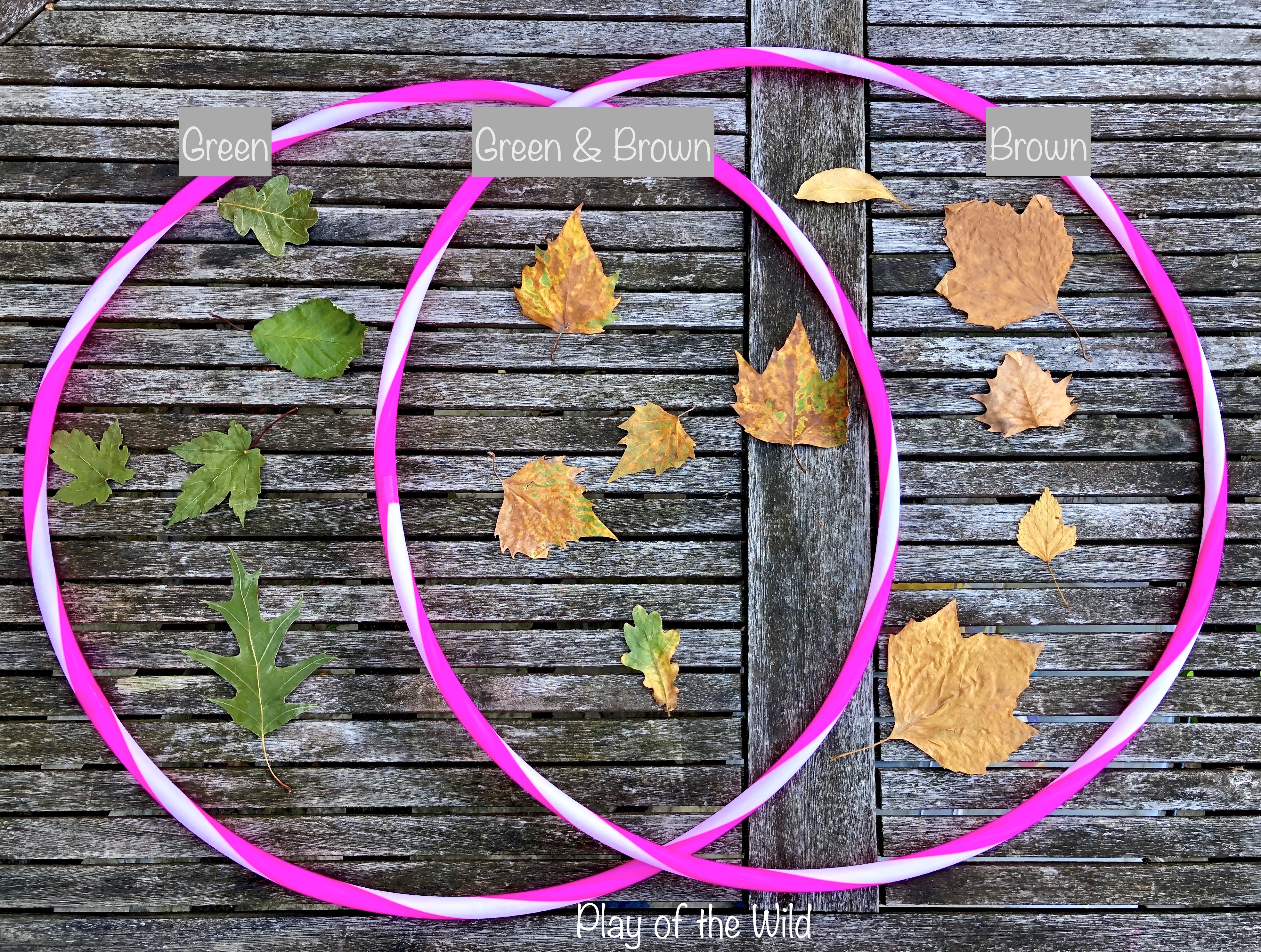 sorting leaves by colour. Venn Diagrams for Children.