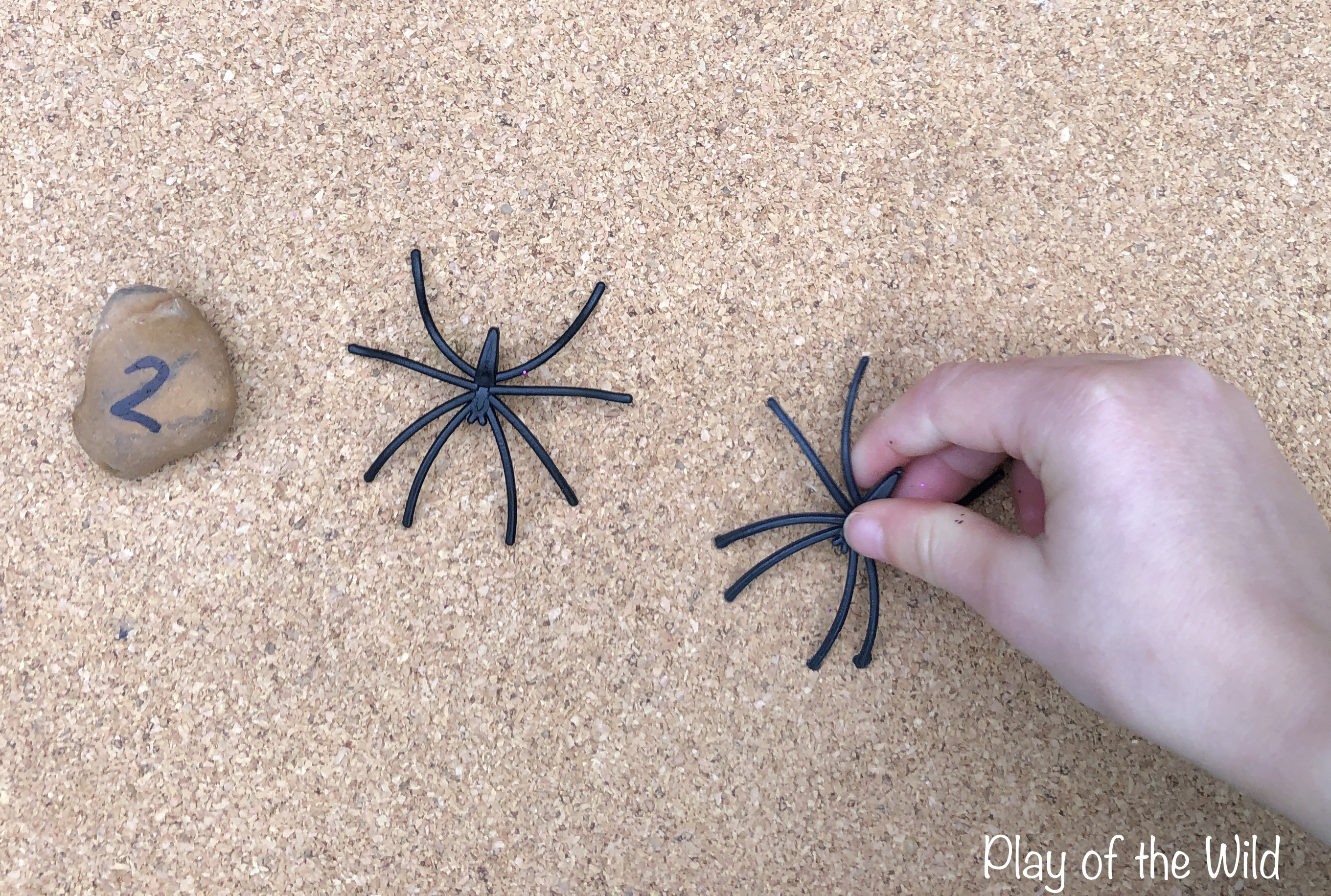 matching spiders with numerals.