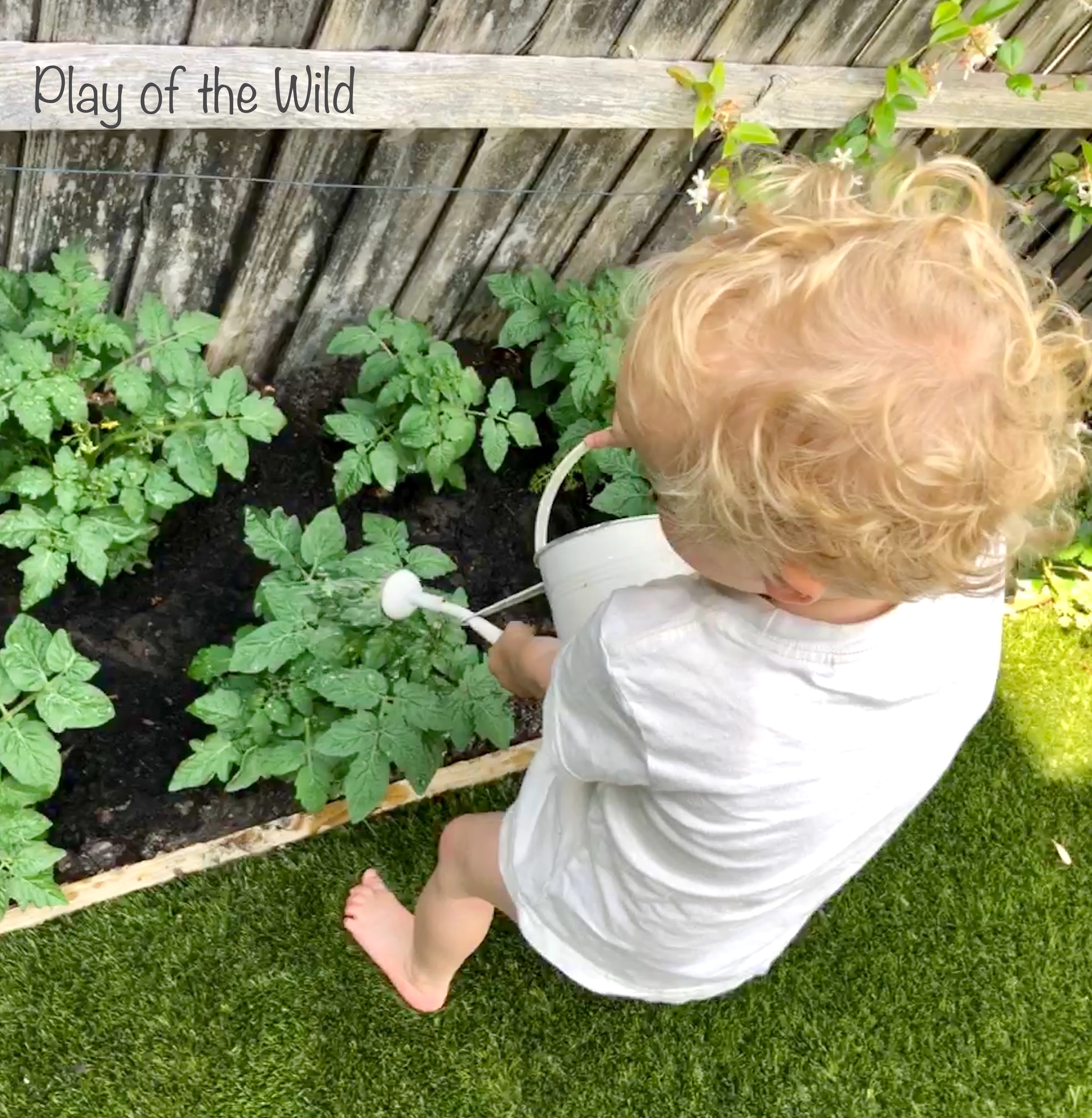 Growing Tomatoes with Children. watering the garden