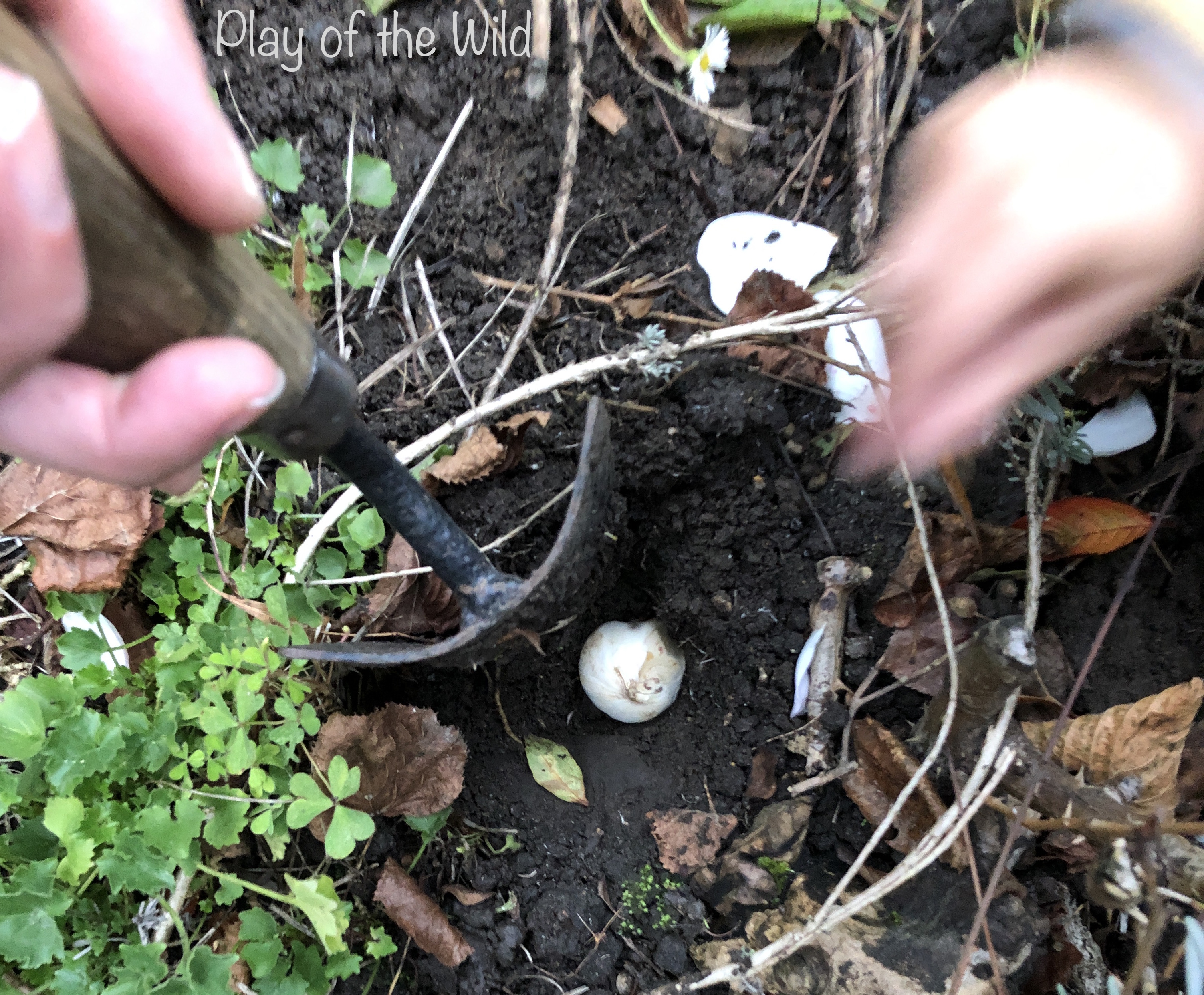 Bulbs for kids. Planting bulbs with children.