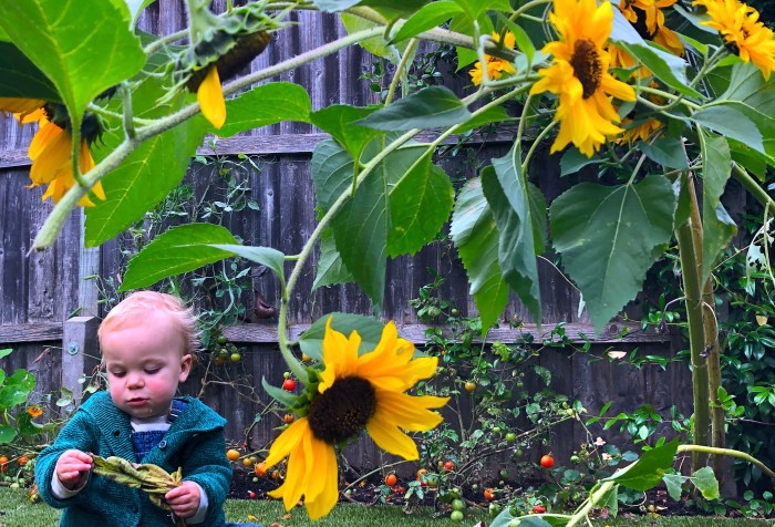 Ways Kids Can Help the Environment. growing sunflowers with chidlren.