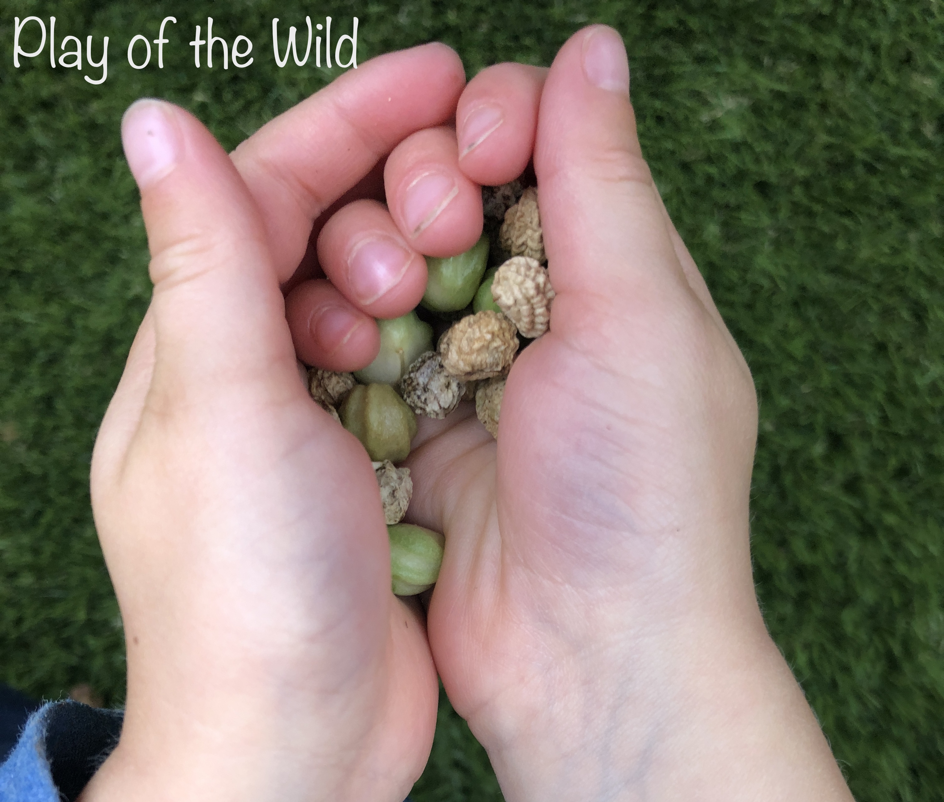 collecting seeds. Outdoor Autumn & Winter Garden Activities for Children
