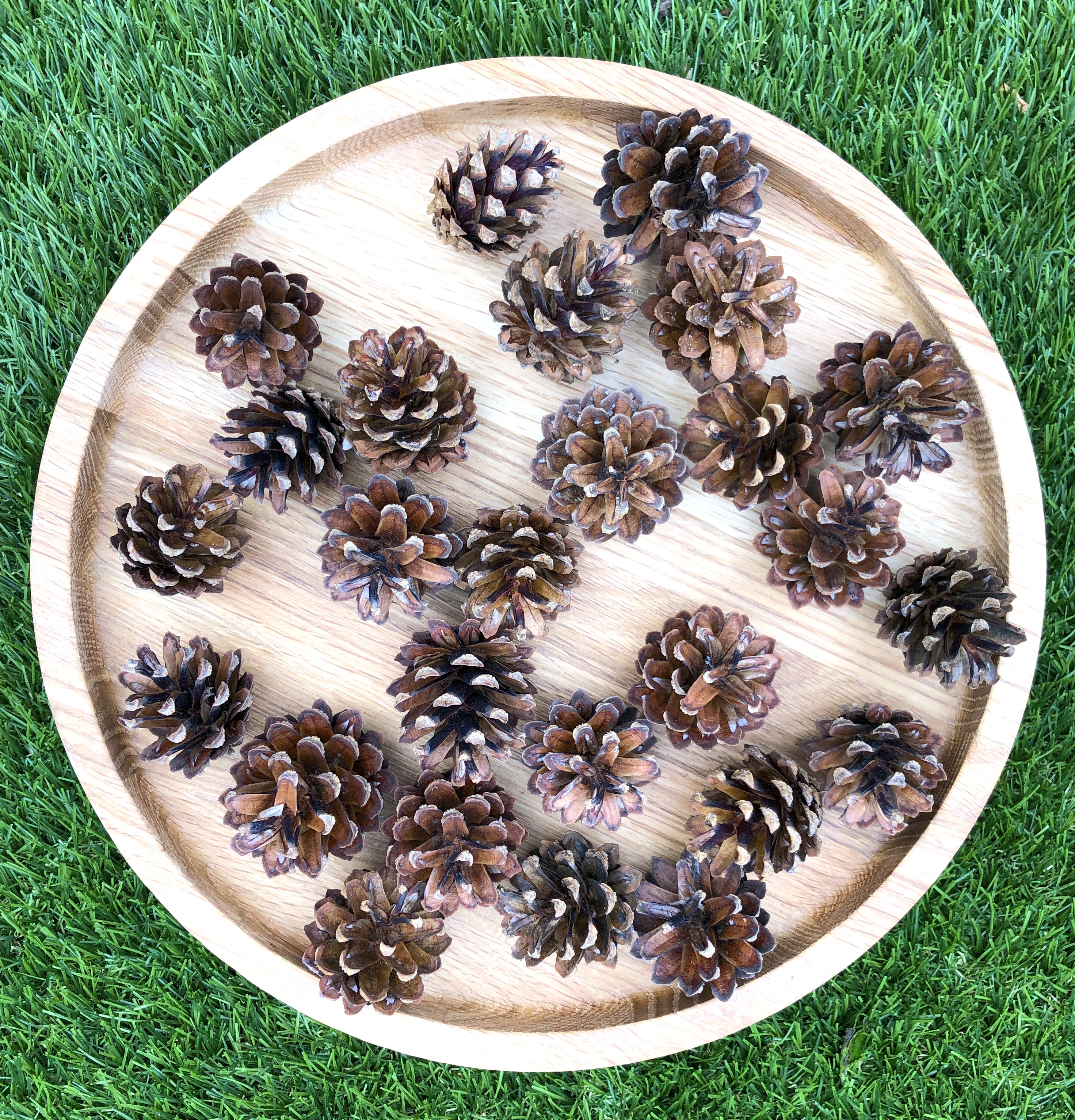 pinecones for crafts with children