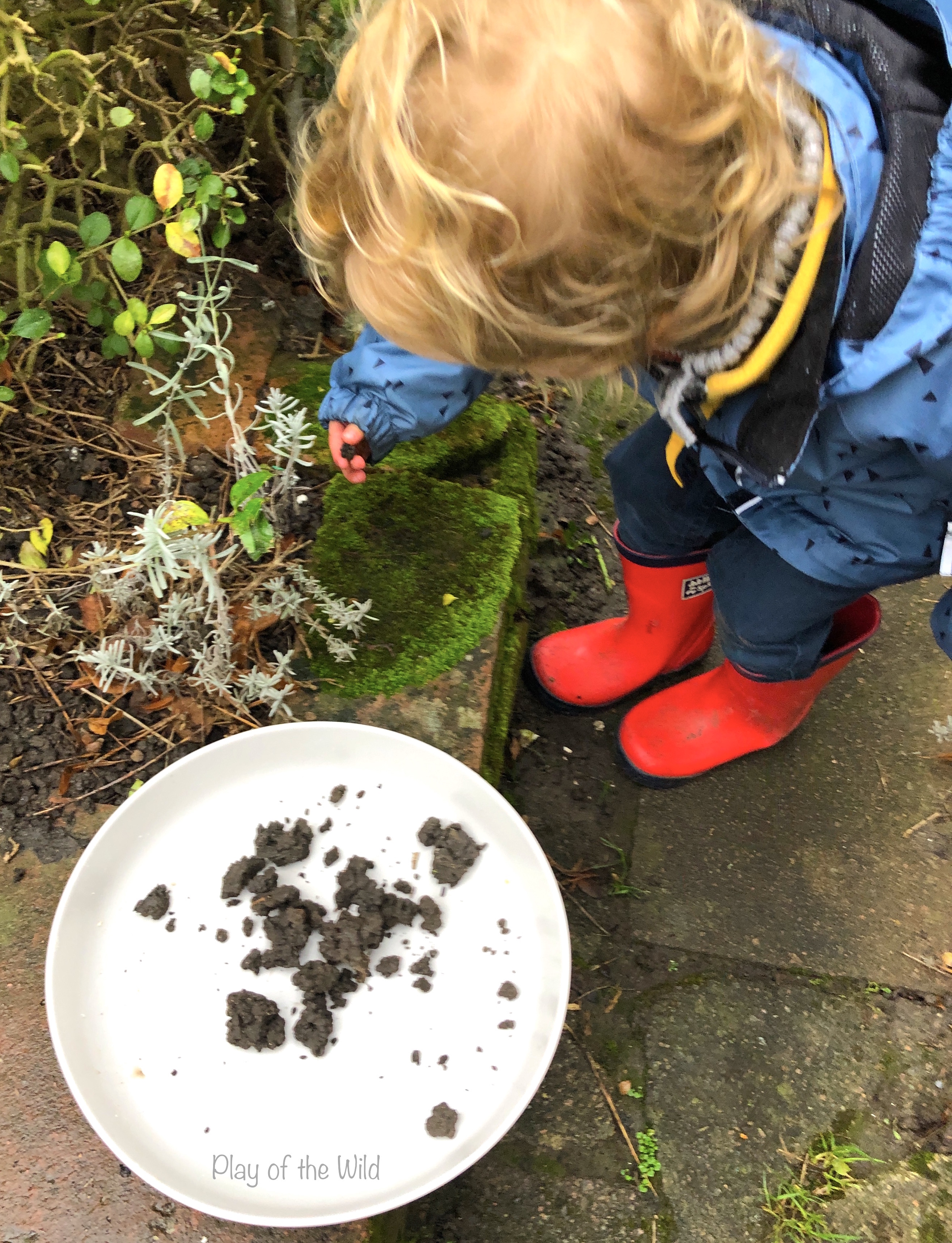 collecting worm castings. Sowing & Spreading Wild Flowers with Seed Bombs.